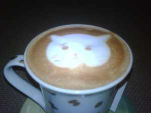 Cat looks Machiato