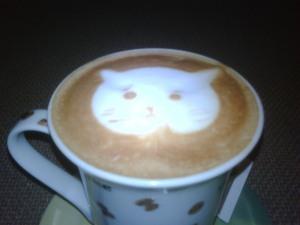 Cat looks Machiato